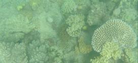 Cairns: a porta oficial para a Grande Barreira de Corais